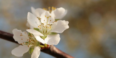 Dr. Bach's blomsterterapi